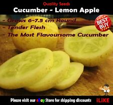Cucumber Lemon Apple 10 Seeds Minimum. Vegetable Garden Plant. The Best Type.