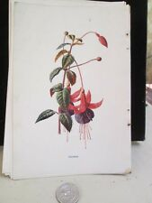 Vintage Print,FUCHIA,Familiar Garden Flowers,Hulme