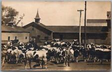 1910s RPPC Photo Postcard FARM SCENE Farmer w/ Holsten Milk Cows & Prize Bull