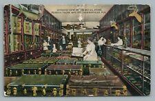 Florida Trunk Manufacturing Co. JACKSONVILLE Store Interior—Alligator Taxidermy