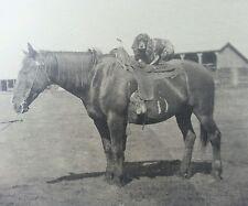Antique Pre Ww1 American Horse Cocker Spaniel Dog Artistic Western Art Photo
