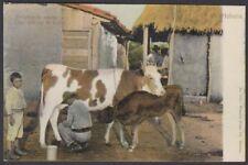 POS-925 ANTILLES POSTCARD CIRCA 1910 ORDEÑO DE VACA COW MILKIN UNUSED