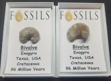 POCKET MONEY FOSSILS. FOSSIL BIVALVE