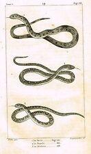 """Lacepede's Oeuvres du Comte - """"LE DIVIN - SNAKES"""" - Lithograph - 1833"""