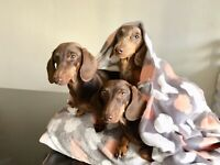 Cozy And Warm Dog Bed With Blanket Attached. Snuggle Pocket Sack.