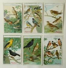 6 Kaufmannsbilder von Palmin Serie 110 Singvögel