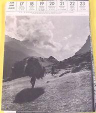 1957 Ile de Ré Ane en Culotte, A Donkey With Trousers,Burro Con Calzones