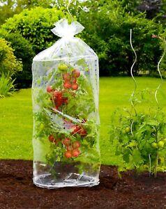 WENKO 2er Tomaten Hauben Pflanzen Regen Schutz Schädlingen Garten Helfer Ernte