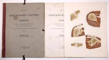1865 Volz, Luwig.  Beitrag zur chirurgischen Anatomie der Extremitäten 10 Tafeln