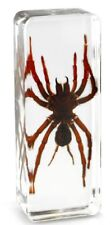 Real Asian Black Moss Spider Insect Paperweight Specimen - Large Block