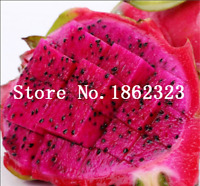 400 Pcs Seeds Red Pitaya Japanese Juicy Bonsai Dragon Fruit Garden Raras NEW S X