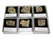 NWA 2947 L5 meteorite slice in Square display case Early NWA number