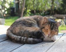 METAL REFRIGERATOR MAGNET Cat Curled Up Sleeping On Porch Cats