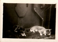 Vintage Photograph- Puppy with Cat , pet, mid 20th century