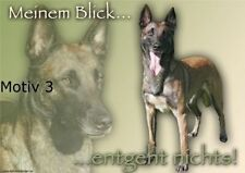 Malinois Hunde-Schilder & -Plaketten mit dem Thema Humor