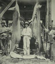 Leeward Islands Sir Eustace Fiennes Tiger Shark Fishing 1928 Photo Article 7072