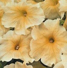Petunia - Prism Sunshine - 100 Seeds