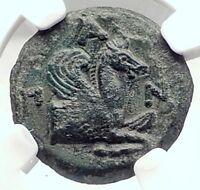 PANTIKAPAION in Bosporus 310BC Ancient Greek Coin w SATYR & PEGASUS   NGC i73132