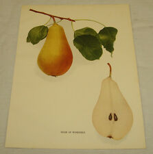 1921 Antique Print/VICAR OF WINKFIELD/From Pears of New York, by Hedrick