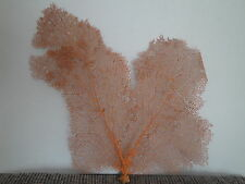 "18""x 18.5"" Large Pacifigorgia Red Sea Fan Seashells Reef Coral"