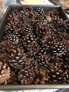 25 Pine Fir Cones Pinecone Crafts Christmas Wreath Decoration Wedding 4-5cm UK