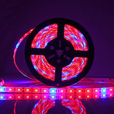 New listing 5M Smd 5050 Led Grow Light Strip Lamp Red Blue For Indoor Plants Flower