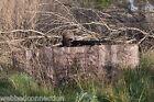 Avery Greenhead Gear 6' Fast Break DoveTurkey Duck Ground Blind Buck Brush (BB)