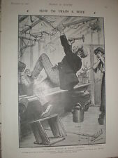 How to Train a Wife Winter Gardening Charles Crombie 1906 old cartoon print
