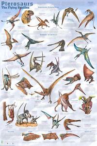 Pterosaurs Educational Decorative Chart Dinosaur Poster 24x36 FREE SHIPPING