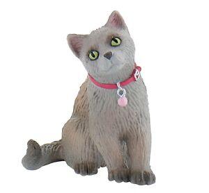 BUL66372 - Cat Russian