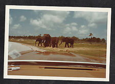 Vintage Photograph Group of Beautiful Elephants Taken From Car Window