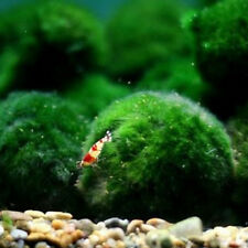 3-5cm Marimo Moss Balls Live Aquarium Plant Algae Fish Shrimp Tank Ornament