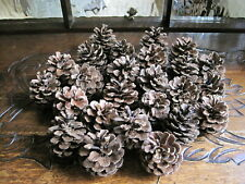 25 Natural Pine Cones  this years pick Large 5-7cm Plump ideal floral decor