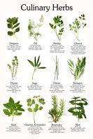 Herbs Herbal Medicines Herb Garden CD 29 Books Culinary Herbs Medicinal