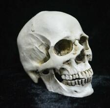 Human Head Resin Replica Medical Model Skull Chin Can Separated Halloween Skull