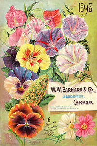 1898 W W  Barnard & Co, Seedsmen Flower Catalogue Cover, NEW Fine Art Print