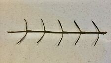 Vintage Wire Corn Seed Dryer Hanger For 10 Ear of Corn.  Great for Decorating!