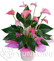 100 PCS Seeds Flowers Bonsai Anthurium Andraeanu Potted Plants Home Garden NEW O