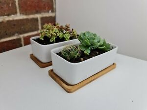 Set Of Two White Ceramic Rectangular Pots With Bamboo Saucer