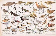 RSPB - Bird Cards - 1960 - N.W.CUSA . Chart N° 7 - 325X210