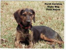 Postcard North Carolina State Dog Plott Hound