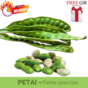 Organic Stink Beans (Petai) Good for Health 100 gram Fast Shipping Confirm