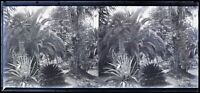 Plantation Esotico c1930 Foto Negativo Placca Da Lente Vintage Stereo VR16