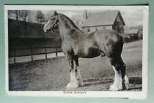 More details for postcard 1913 bonnie buchlyvie.clydesdale stallion.horse,animals.seaham,durham