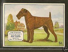 1938 Uk Dog Art Photo Hand Colored Ardath Cigarette Card Champion Irish Terrier