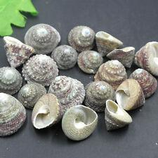 10pcs Beautiful top rare real sea Shell Conch ES011