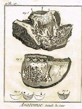 """Diderot's """"Enclyclopedie"""" - ANATOMIE - DETAILS DU COEUR - c1750"""