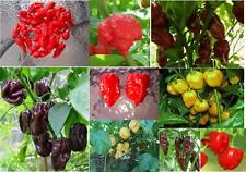 #2 SuperHot Pepper Seed Collection,Chocolate Bhut Jolokia,Red Douglah, & 8 More!