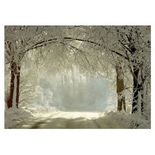 7 x 5ft Winter Backdrops Photography Snow Freeze Forest Background V8W6