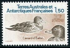TIMBRE T.A.A.F. / TERRES AUSTRALES NEUF  N° 97 ** FAUNE / CANARD D'EATON